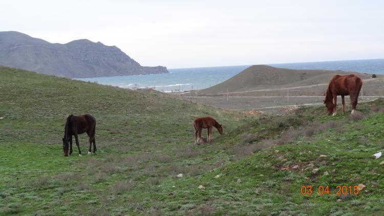 Меганом - Конные  прогулки
