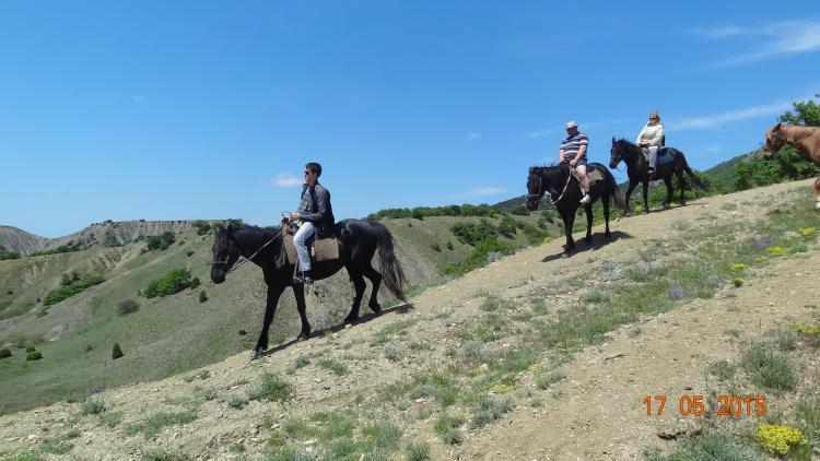 кони - Конные  прогулки