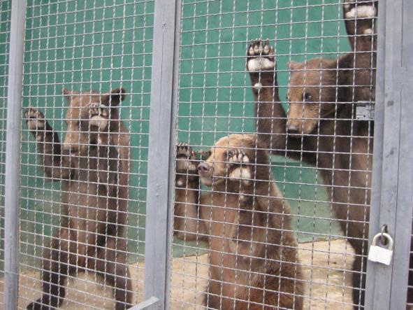 """медведи - Сафари-парк """"Тайган"""""""