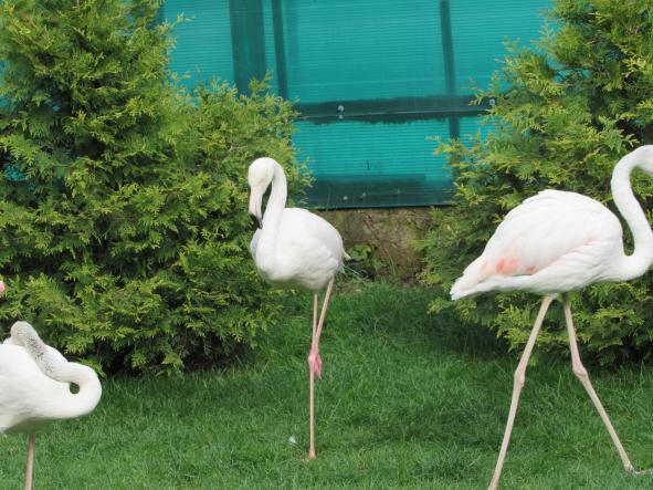 """фламинго - Сафари-парк """"Тайган"""""""