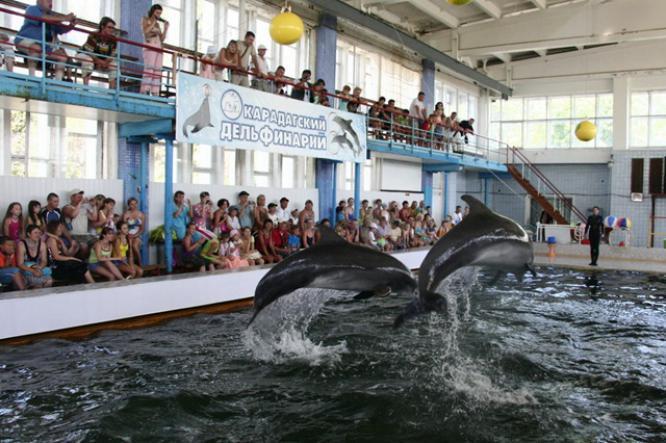 карадагский дельфинарий - Дельфинарий в посёлке Курортное