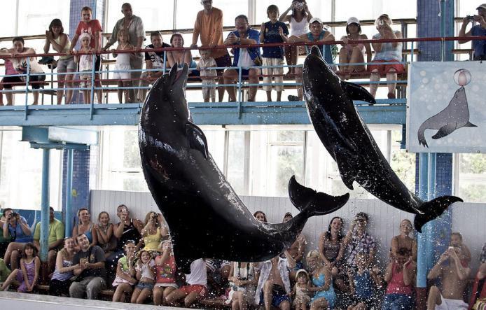 карадаг - Дельфинарий в посёлке Курортное