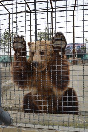 """медведь - Сафари-парк """"Тайган"""""""
