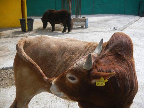 """бычек - Сафари-парк """"Тайган"""""""