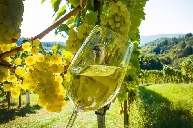 Вино и Крым - Винный тур