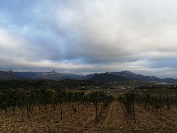 Виноградники долины Св. Саввы - Винный парк в долине Святого Саввы