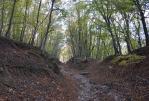 крымский лес - Старый Крым