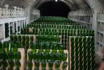 новый свет шампанское - Дом шампанских вин: экскурсия+дегустация