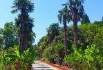 Никитский ботанический сад. - Крымское Ожерелье (для групп от 6 чел)